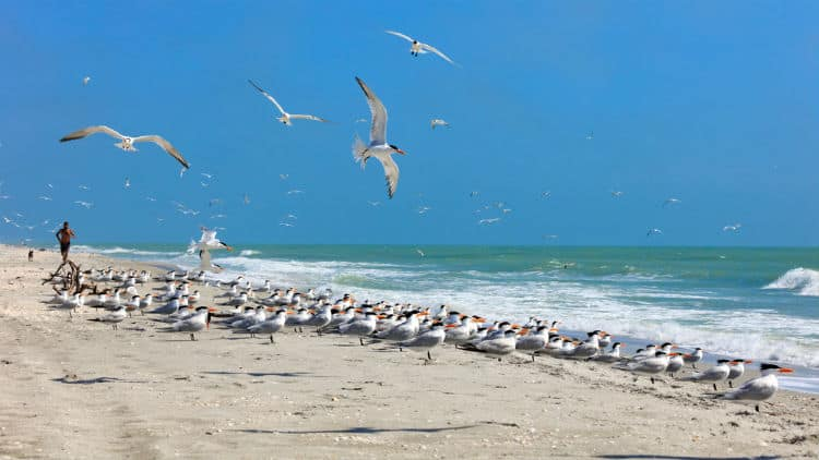 Sanibel Island Beach, Florida
