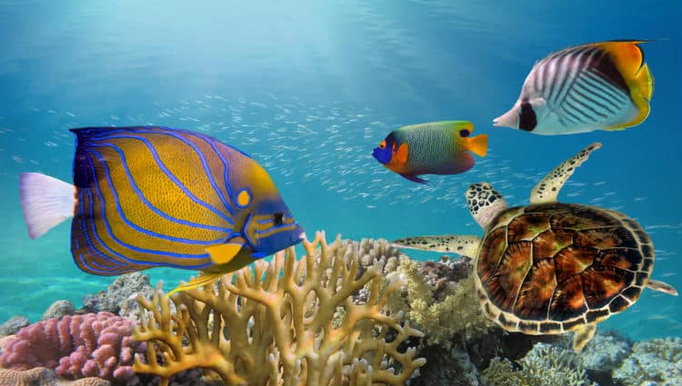 Marine life in Great Barrier Reef