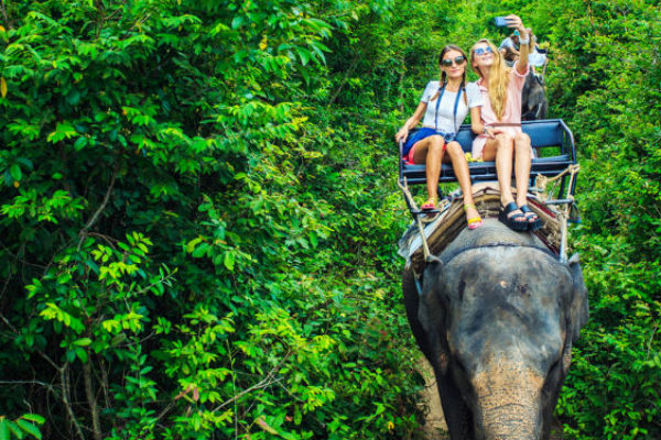 Best wildlife holidays