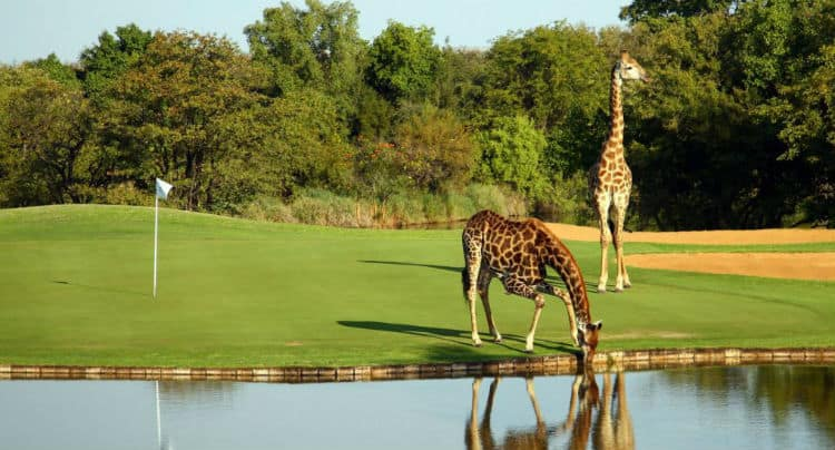 Golf holidays in South Africa