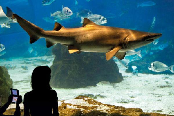 Barcelona Aquarium tickets