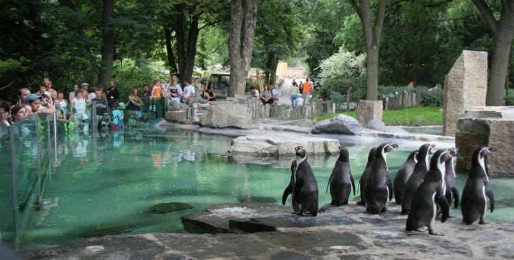 Prague Zoo - tickets, prices, discounts, hours, animals