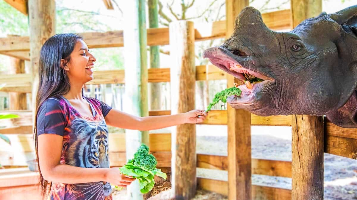 Tampa Zoo Tickets Prices Discounts Safari Tram Roaring Springs Ride